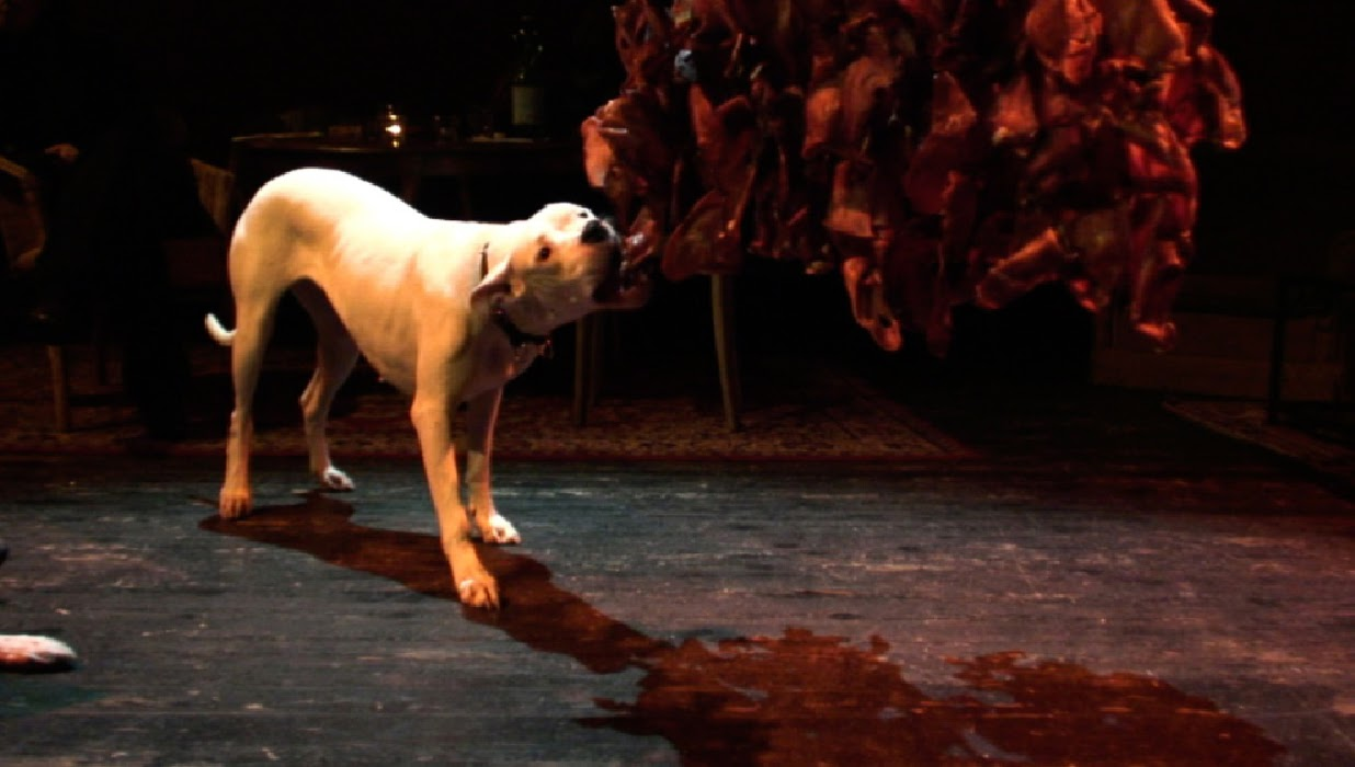 Lucia-Moure-Dogs4web