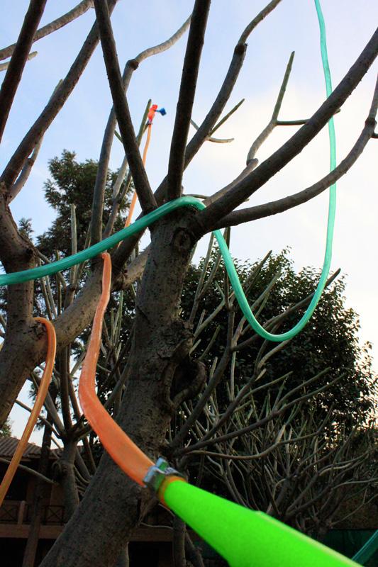 Lucia-Moure-Frangipani-tree-2